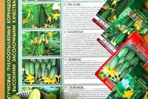 Поликарп — сорт растения Огурец