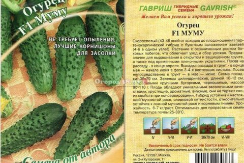Огурец Принц Датский F1 — фото урожая, цены, отзывы и особенности выращивания