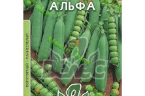 Дакота — сорт растения Горох овощной