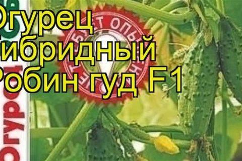Огурцы партенокарпические : Семена Биотехника Огурец Робин Гуд F1
