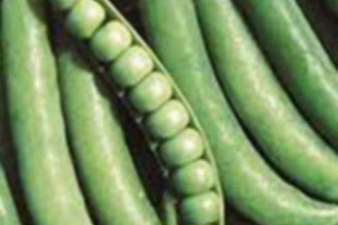 Горох овощной ДЖОФ (Голландия) — «😉Хотите есть зимой свежий горошек, тогда обратите внимание на голландца Джоф.»  | Отзывы покупателей