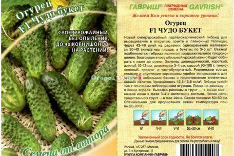 Русский Экспресс — сорт растения Огурец