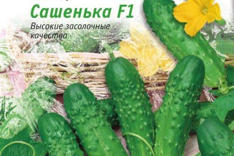 Сашенька — сорт растения Огурец