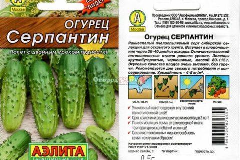 Сорт огурцов Серпантин описание, отзывы огородников, фото, посадка и уход, характеристика, семена
