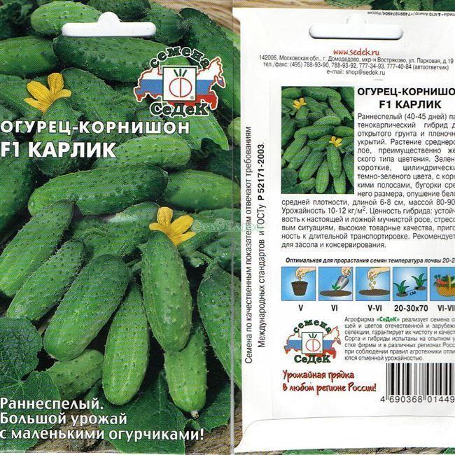 Скоморох - сорт растения Огурец