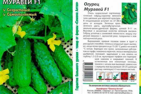 Огурец Сорванец F1: отзывы и описание, фото семян, посадка и уход