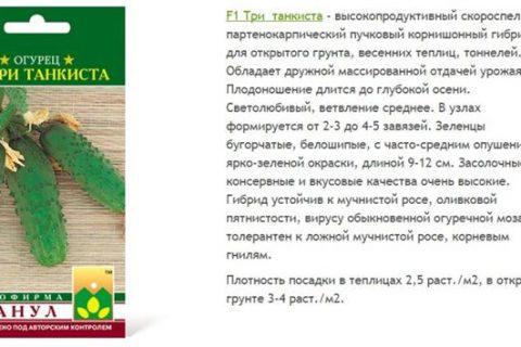 Огурец Три танкиста: описание и характеристика сорта, отзывы садоводов с фото
