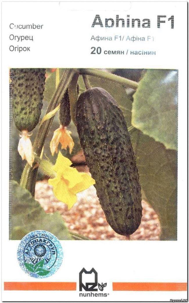 Триоле F1 семена огурца партенокарпического (Rijk Zwaan / Райк Цваан)