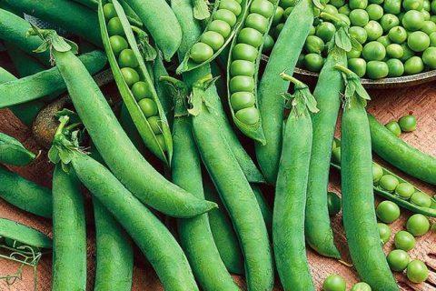 Легаси — сорт растения Горох овощной