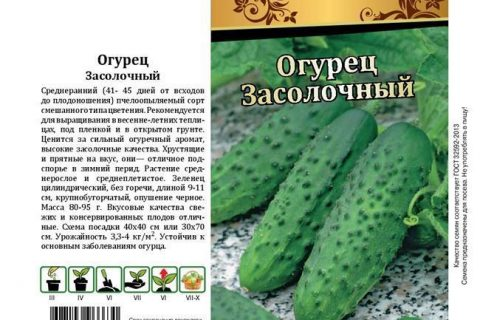 Шустрик — сорт растения Огурец