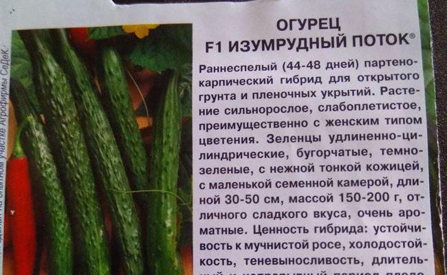 Южный Изумруд - сорт растения Огурец