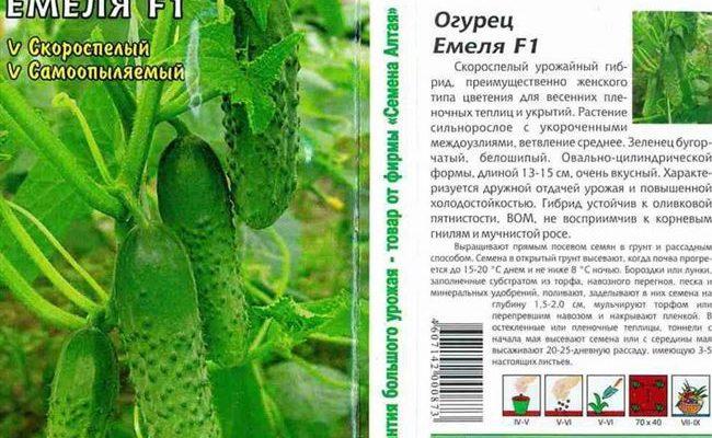 Приспособленный к непогоде и жестким условиям сорт огурцов — Ямал F1: отзывы и описание