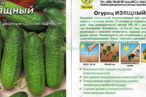 F1 Яромир | Профессиональные семена «Гавриш»
