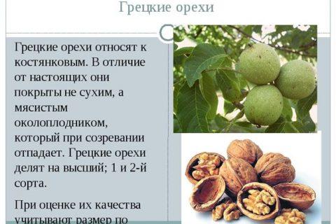 Сорта грецкого ореха: обзор лучших представителей | Огородники