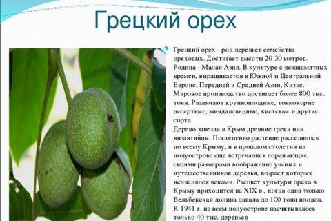 Кодрене — сорт растения Орех грецкий