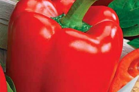 Сорта и гибриды перцев от ООО Агрофирма АЭЛИТА