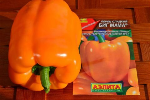 Перец Биг мама: описание сорта, характеристика плодов, агротехника выращивания и ухода