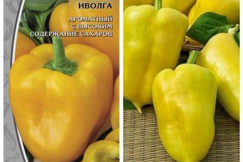 Перец Иволга: характеристика и описание сладкого болгарского сорта, отзывы об урожайности, высота куста, фото семян Поиск, пасынкование и агротехника