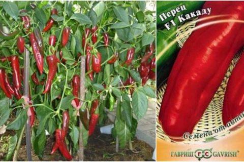 Перец Какаду — характеристика и описание сорта, гибрида, фото, урожайность, отзывы овощеводов