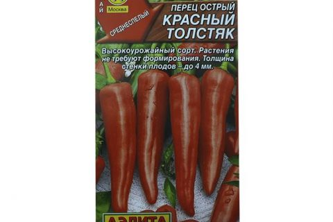 Перец острый красный толстяк посадка и уход в теплице, описание сорта + фото