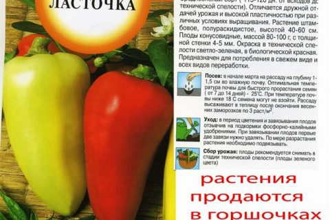 Перец Ласточка: описание сорта, характеристика плодов, агротехника выращивания и ухода