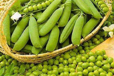Горох Цереса — фото урожая, цены, отзывы и особенности выращивания
