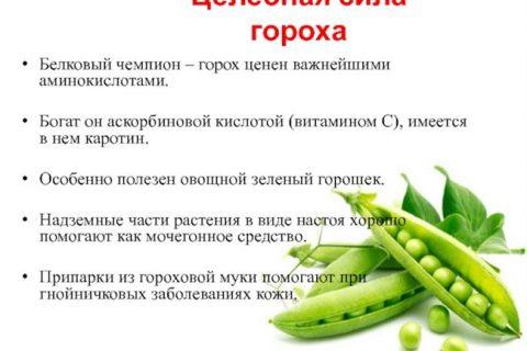 Чемпион — сорт растения Горох овощной