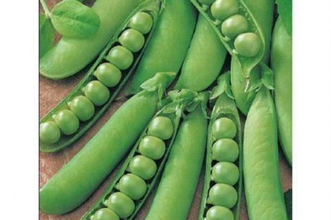 Горох Щербет сахарный семена — низкая цена, описание, отзывы, продажа