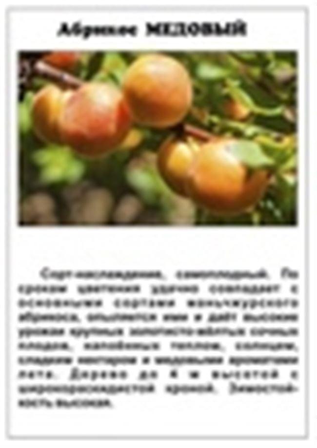 Размножение абрикоса с помощью черенков