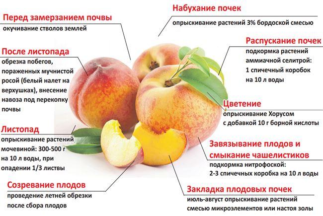 Заболевания, которым подвержен абрикос, и их лечение - таблица