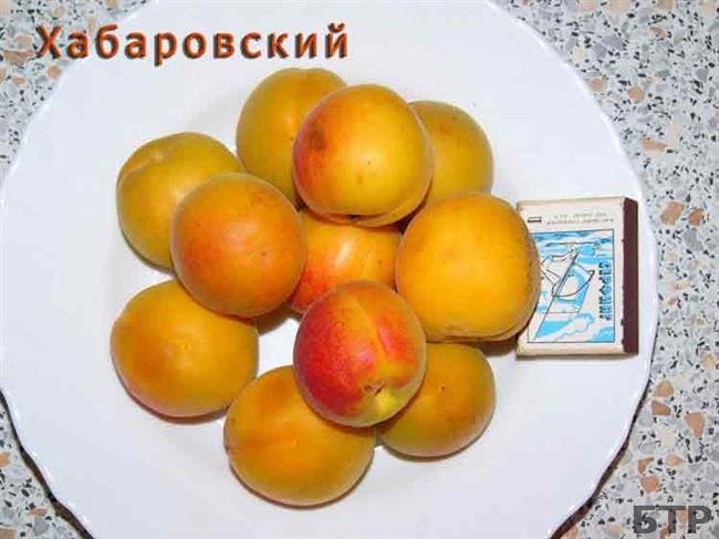 Отзывы о сорте абрикос Хабаровский