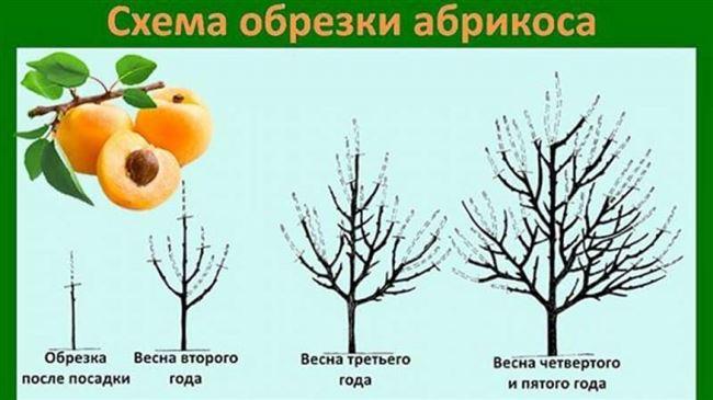 Обрезка деревца