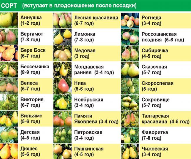 Общая таблица хранения