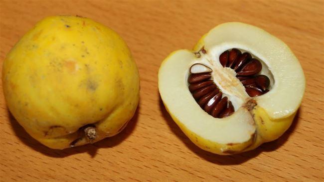 Семенное размножение