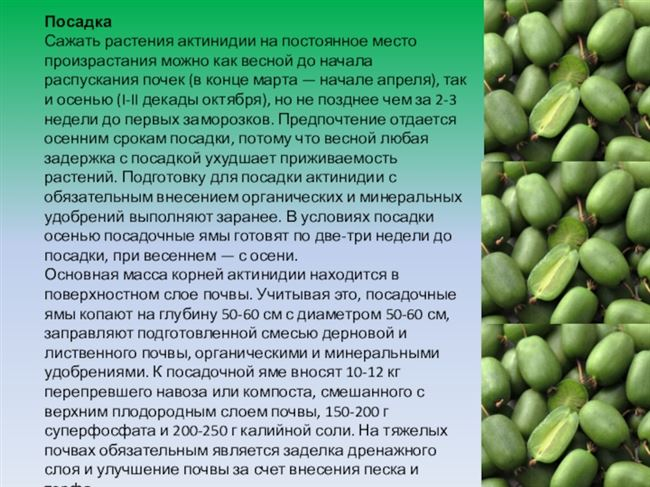Характеристика свойств растения