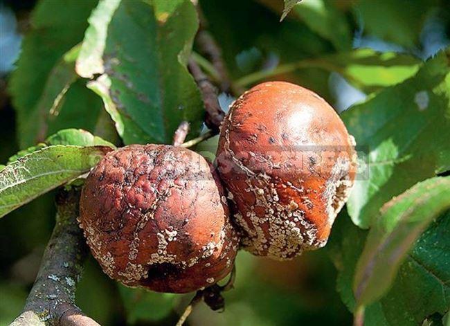 Профилактика и защита плодового сада