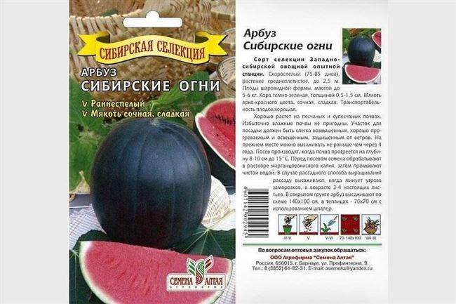 Как высаживать арбузы в открытый грунт
