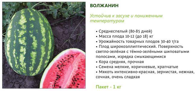 Арбуз Волжанин (10 семян), семена, уход, посадка