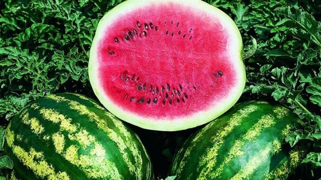 Условия выращивания и ухода