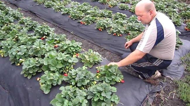 Посадка и выращивание овощей и фруктов, уход за садом, строительство и ремонт дачи - все своими руками.