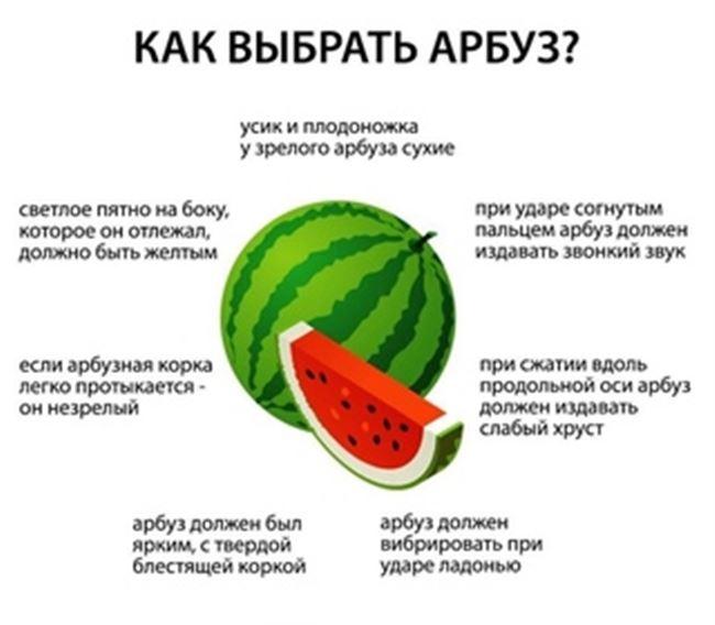 Основные требования бахчевых культур