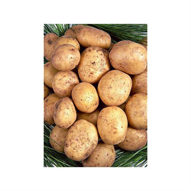 Уход за сортом картофеля Метеор