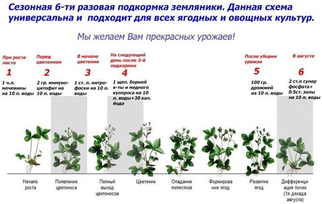 Особенности размножения и посадки, уход