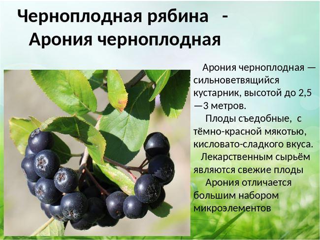 Размножение аронии семенами
