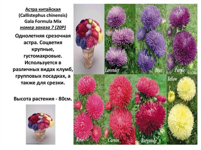 Условия выращивания