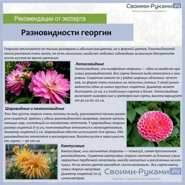 Характеристика растения