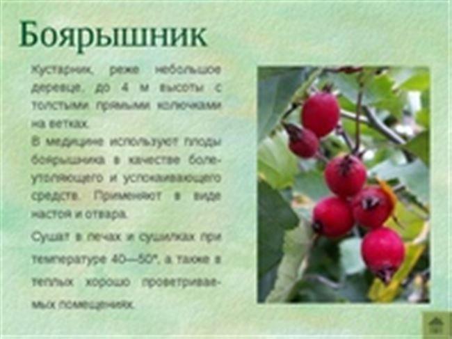 Общая характеристика плодового дерева