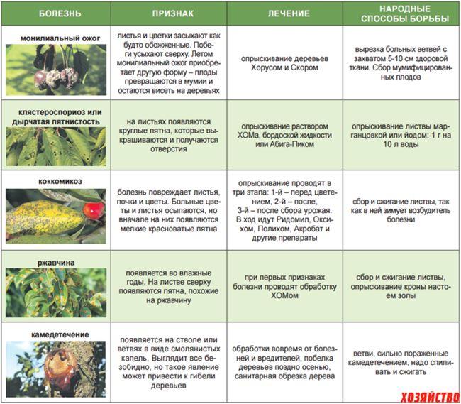 Таблица: профилактические и санитарные мероприятия по предотвращению болезней и нападения вредителей