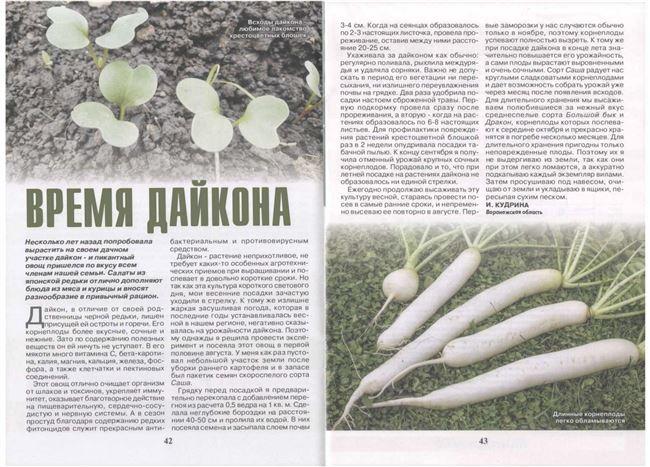 Уход за дайконом в период роста ботвы и корнеплода