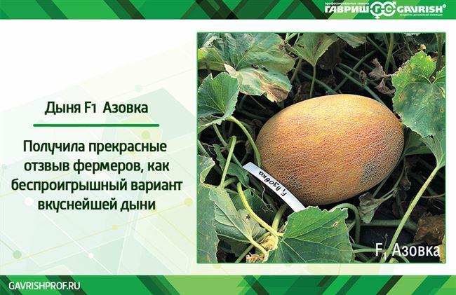 Заказать семена дыни Азовка F1